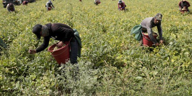GOP Sen. Mike Crapo Endorses Amnesty, Foreign Workforce Bill