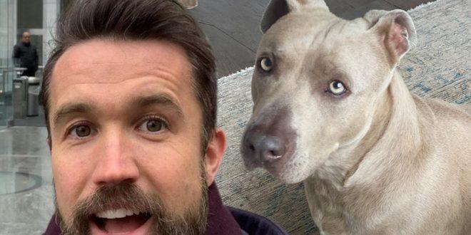 Rob McElhenney & Kaitlin Olson Rescue Dog, Reunite Him with Happy Family
