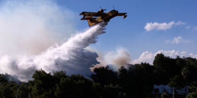 'Ecological disaster' feared as Greece battles massive forest fire