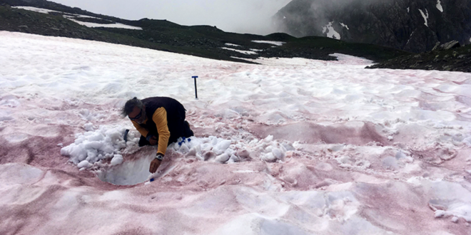 'Glacier Blood' Is the Latest Climate Change Horror