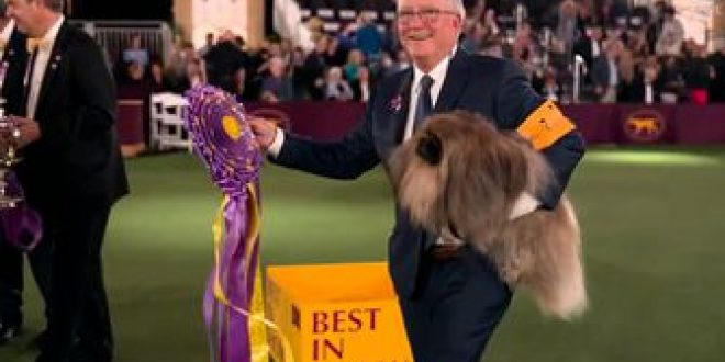 Wasabi, the Pekingese, crowned Best in Show at 145th Westminster Kennel Club Dog Show
