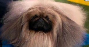 'He's a wonderful dog'