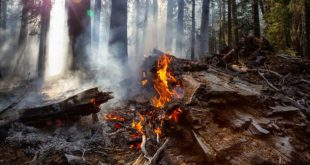 Whitson Lake fire in Sudbury accounts for the one new fire in the northeast today
